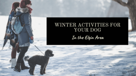 Activities for your Dog When Winter Gets Ruff