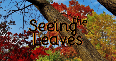 Seeing the Leaves: A Guide to Elgin Area Forest Preserves and Nature Centers