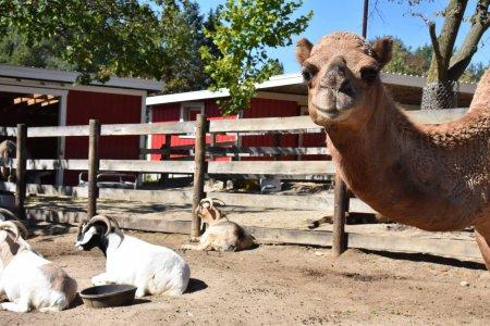 Randall Oaks Zoo